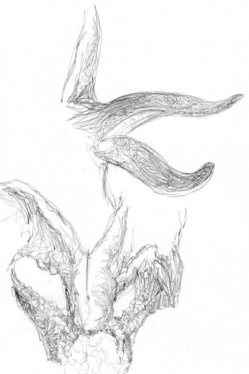 Starfish LEVELS